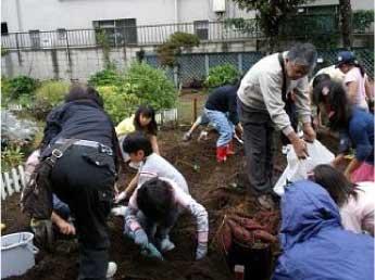 高齢者施設「菊かおる園」の庭で地域住民、ケアハウス住民、放課後子ども教室のこどもと一緒に芋掘り