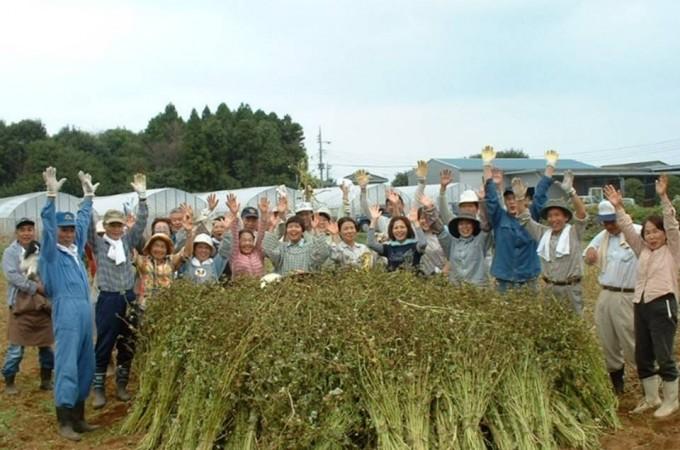 生き生き自然農業 そばの収穫